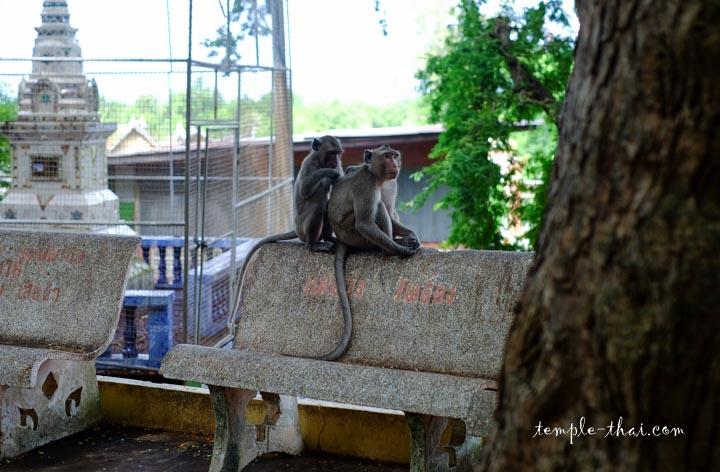 Singes à Phetchaburi