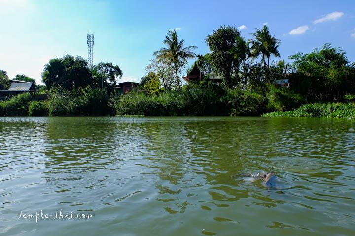 rivière Lopburi