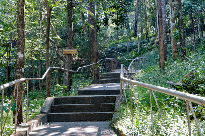 Escalier nature