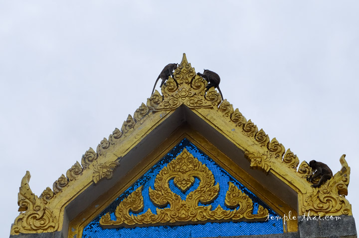Macaques Lopburi