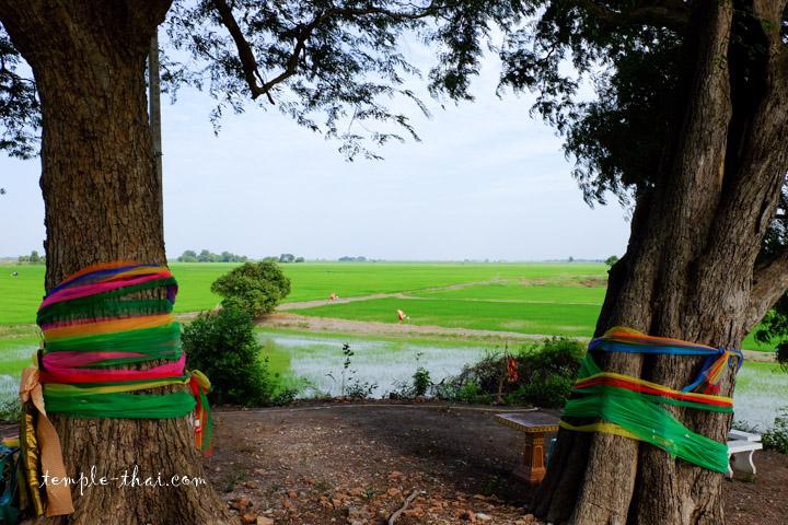 Rizières Ayutthaya