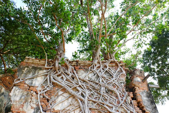 Temple racine
