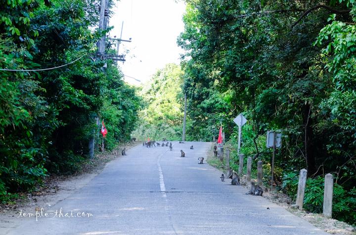Macaques Thaïlande