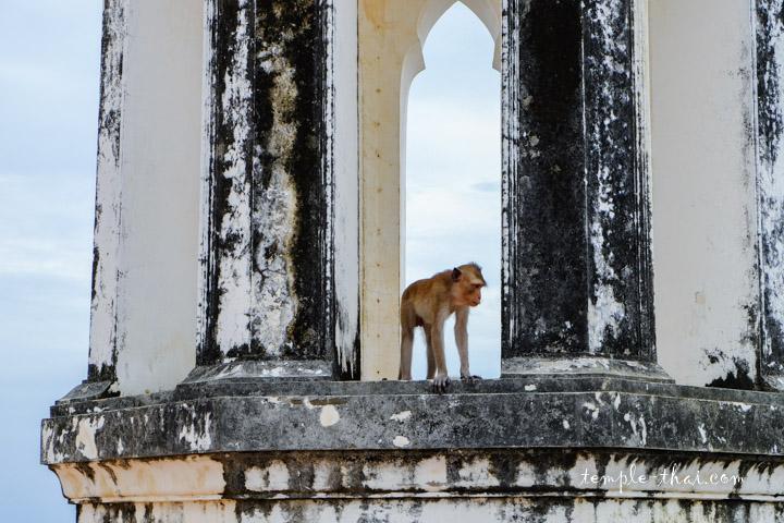 Macaque Thaïlande