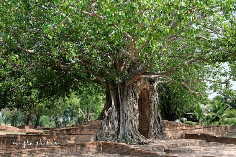 Wat Phra Ngam Khlong Sa Bua